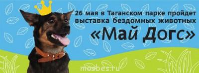 Выставка бездомных собак в Таганском парке - Pe5wyzB3aDW50zARG_8Zg6Zkg_IUrSK4k7843cT_rMg.jpg